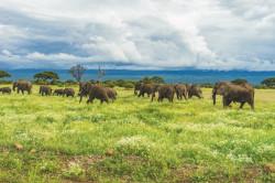 Туристическая страховка в Танзанию