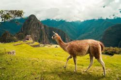 Туристическая страховка в Перу