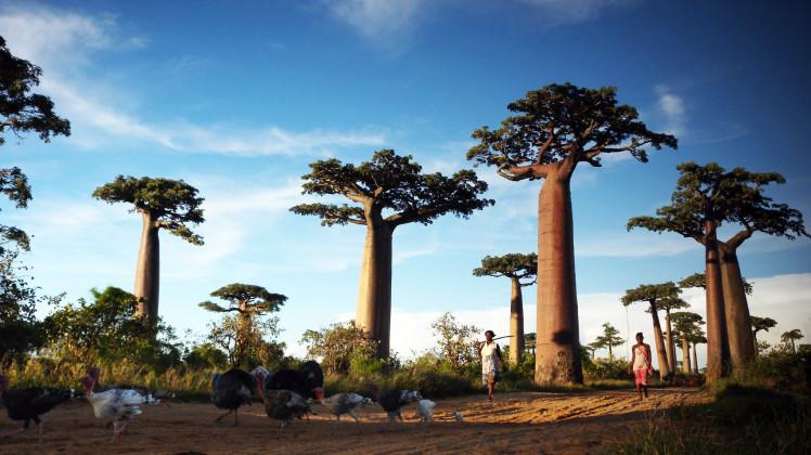 Туристическая страховка на Мадагаскар